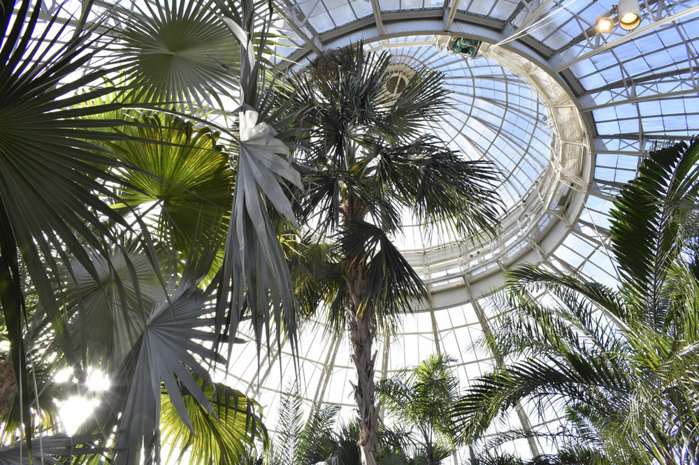 Conservatory Dome